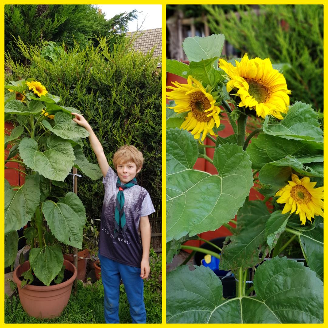Cubs Gardening Through the Summer